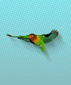 Parrot, Canvas, Prints, Animals, Fisher, Products, Bowties, Wall Canvas, Art Prints