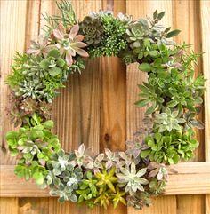 Succulent wreath by rootedinsucculents.com