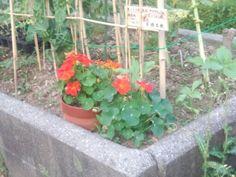 Lovely flowers!