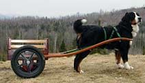 Deluxe Small Competition Dog Cart