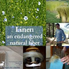 Linen is an exquisite natural fiber, known for its durability, beautiful sheen, and wicking properties. It is cool to wear in summer, naturally antibacterial, resists soiling but needs ironing. The plight of linen is a heart breaking story. Once the fiber grown in every croft and cottage for household use. Once spun and woven by …