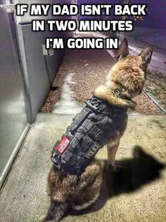 Here Is Why Service Dogs Are So Awesome (Memes)You can find Working dogs and more on our website.Here Is Why Service Dogs Are So Awesome (Memes) Military Working Dogs, Military Dogs, Police Dogs, Military Service, Funny Dogs, Funny Animals, Cute Animals, Funny Dog Memes, Animals Dog
