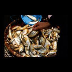 """""""Hong Kong Fish Market"""""""