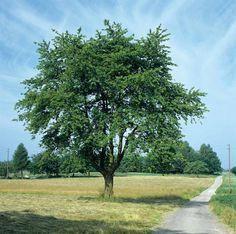 Bomen in de seizoenen – ESERO