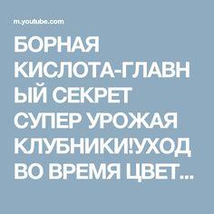 БОРНАЯ КИСЛОТА-ГЛАВНЫЙ СЕКРЕТ СУПЕР УРОЖАЯ КЛУБНИКИ!УХОД ВО ВРЕМЯ ЦВЕТЕНИЯ! - YouTube