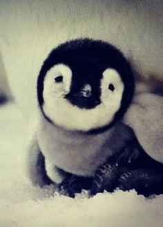 I love me some penguins.