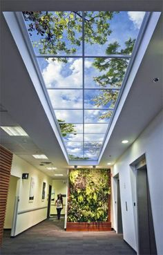 Why Biophilic Design Is Important In Our Interior Environments