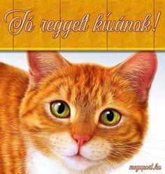 Jó reggelt kívánok! - Megaport Media Share Pictures, Animated Gifs, Humor, Halloween, Cats, Funny, Animals, Humour, Gatos