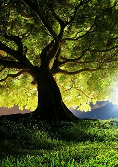 One day all religions will have to come under one tree