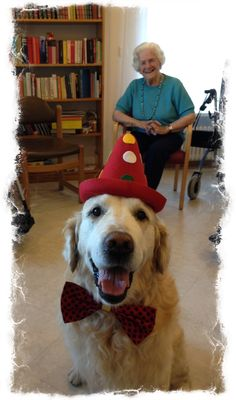 Rocky in Switzerland is a therapy dog and spreads cheer at a retirement home