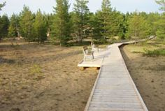 Walking board at the dunes of Etelänkylä village in Kalajoki, North Ostrobothnia, Finland. Sand is a common sight at the Finnish west coast, lovely to walk on as well as the experience of the special forest that´s connected to those dunes. Hiking along those kind of routes is common among people living here. The Dunes, West Coast, Hiking, Middle, Board, Nature, People, Finland, Walks