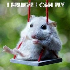 I believe I can touch the sky!