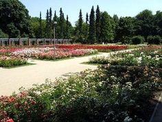 The Rose Garden in Szcezin (Poland)