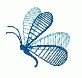 Sheer Butterfly