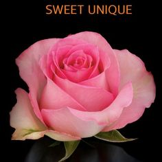 1000 Images About Couleur Rose On Pinterest Roses Pink Roses And Fresh