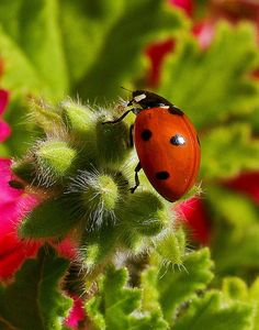 when I was just a little girl, I loved to catch lady bugs, lightning bugs,collect snails, and climb trees