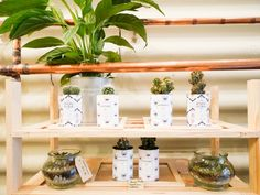 Le Pop Up Store Aÿ Cactus - Lili in Wonderland