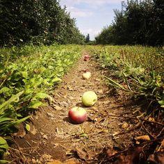 Seneca Lake, Orchards, Apples, Pumpkin, Fruit, Instagram Posts, Outdoor, Outdoors, Pumpkins
