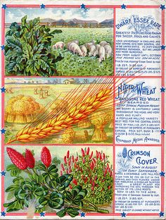 Vaughan's Autumn Seeds and Bulbs back cover