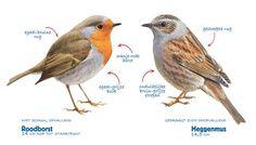 Iedereen kan meedoen met het grootste natuuronderzoek van Nederland. Schrijf u nu alvast in en profiteer van de voordelen! Bird Identification, Birds In The Sky, Nature Journal, Sea Fish, Bird Illustration, Bird Drawings, Vintage Birds, Little Birds, Wild Birds