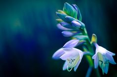 Blossom by Ryan Derish on 500px