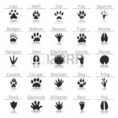 Illustration of Animal track prints set, with names and reflection, on white background vector art, clipart and stock vectors. Survival Supplies, Survival Prepping, Survival Skills, Survival Hacks, Survival Blog, Camping Survival, Outdoor Survival, Survival Gear, Animal Tracks