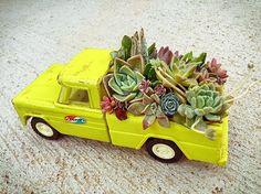Leaf & Clay™: Premium Succulents