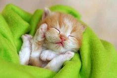 Little kitten sleeping in a blanket