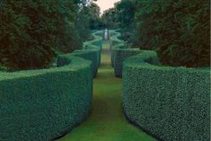An idea of waved hedge / curves towards the sculptures on the wall.