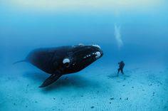 Animal Nature: 'Ocean Soul' photo exhibit dives deep.  What an amazing picture!