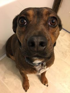 This is my girl Dottie. She likes to watch me while I brush my teeth.   http://ift.tt/2t28g6x via /r/dogpictures http://ift.tt/2tmceX1  #lovabledogsaroundtheworld