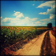 Almádi Ildikó Egy gyönyörű nyári nap Bokod irányába haladva pillantottam meg ezt a szép tájat...rögtön megálltam,hogy lefotózhassam! Több kép Ildikótól: www.facebook.com/ildiko.almadi Nap, Country Roads, Marvel, Facebook, City, Cities
