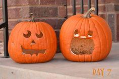 Day 7 of Pumpkin Preservation Test, Pumpkin on the left was preserved, pumpkin on the right was not