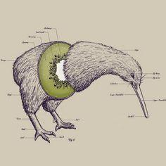 Funny pictures about Anatomy of a Kiwi. Oh, and cool pics about Anatomy of a Kiwi. Also, Anatomy of a Kiwi photos. Art And Illustration, Technical Illustration, Arte Com Grey's Anatomy, Anatomy Art, Animal Anatomy, Art Maori, Zealand Tattoo, Kiwi Bird, Art Design