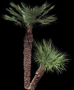Things I wish I knew during Architecture School: Desert Trees