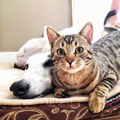 Bengal & Greyhound Super Album - Album on Imgur