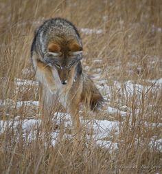 """https://flic.kr/p/dqibuz 