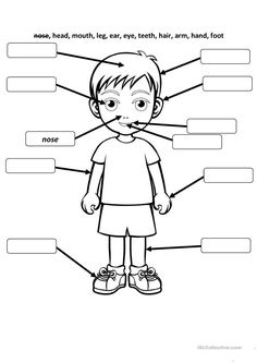 Body and face parts worksheet - Free ESL printable worksheets . - Body Parts Learning English For Kids, English Worksheets For Kids, English Lessons For Kids, English Activities, Preschool Learning, Kindergarten Worksheets, Teaching English, Preschool Activities, Listening Activities