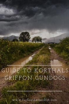 Guide to Korthals Griffon Gundogs The Effective Pictures We Offer You About animal facts crazy A qua Animal Fact File, Animal Facts For Kids, Fun Facts About Animals, Animals For Kids, Animals Information, German Wirehaired Pointer, Train Activities, Animal Wall Decals, Extinct Animals