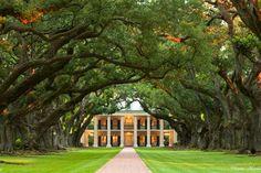 oak alley plantation - Google keresés