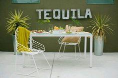 Tequila tasting terras