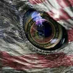 #USMC #military #veterans USMC - Post Jobs and Become a Sponsor at www.HireAVeteran.com