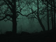 """or: The Forest I think this captures a """"what was that?"""" moment, where you can't quite be sure what you're looking at because of the darkness and fog. That Eerie Feeling Dark Green Aesthetic, Witch Aesthetic, Character Aesthetic, Paranormal, Hogwarts, Chesire Cat, Surface Modeling, Slytherin Aesthetic, Tree Wallpaper"""