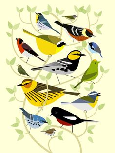 Stylized depiction of North American wood warblers (parulidae). Represented here are the grace's,   tennessee, bay-breasted, yellowthroat, red-faced, black-throated blue, golden-cheeked, orange-crowned,   cape may, crescent-chested, cerulean, painted redstart, and ovenbird warblers.