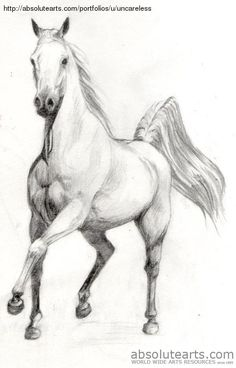 Scetchings Free Beautiful Horses - Bing Images                                                                                                                                                                                 More
