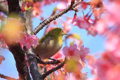 Call the spring by Yasunori Tomori - Photo 62908435 - 500px