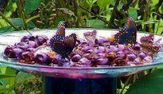 making butterfly feeders