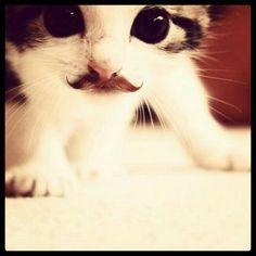 Te gusta este bigotito de Zapata?