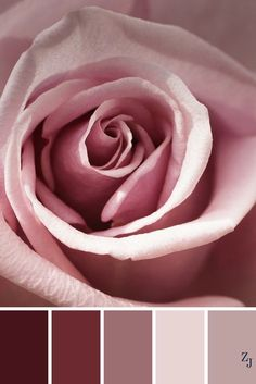 Posta - Daniela Bongiorno - Outlook, beautiful pale pink, mauve and dusty rose colors Colour Pallette, Colour Schemes, Color Patterns, Color Combinations, Color Balance, Colour Board, Color Swatches, Bedroom Colors, Color Theory