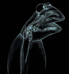 The hand behind the frog! As an old x-ray tech, I like this very much!